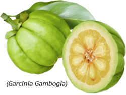 Garcinia Cambogia lose weight with green coffee